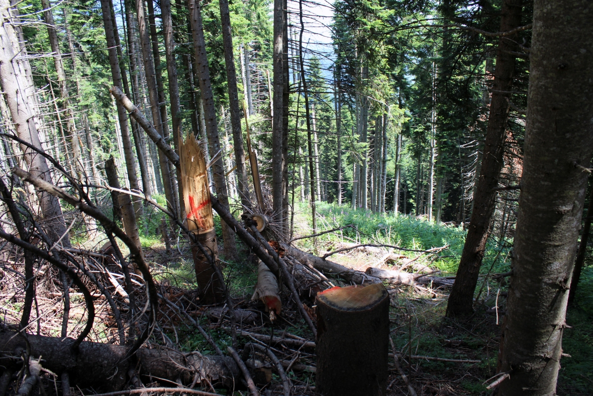 Destruction of forests in Dukagjini Region